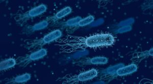 bacteria, medical, biology-3662695.jpg