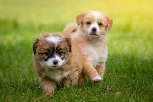 animal, pet, dog-1134504.jpg
