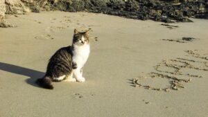beach, cat, sea-1958406.jpg