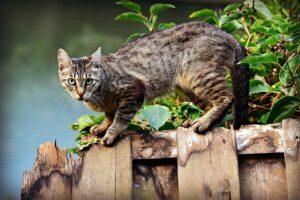 cat, pet, feline-3846780.jpg